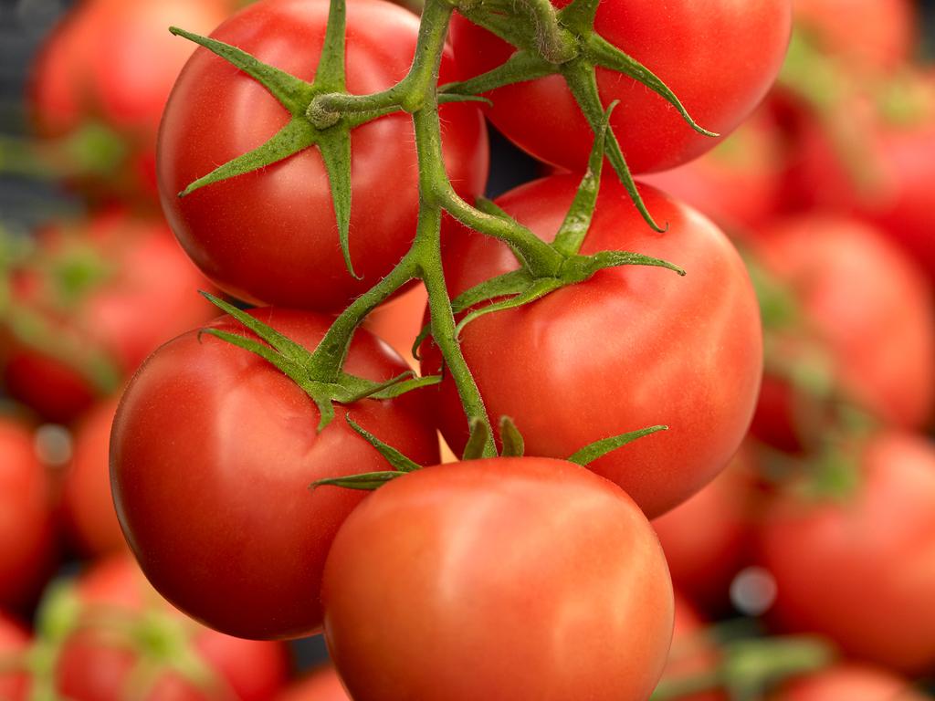 материал урожай помидор картинки представлены тесты автобусов